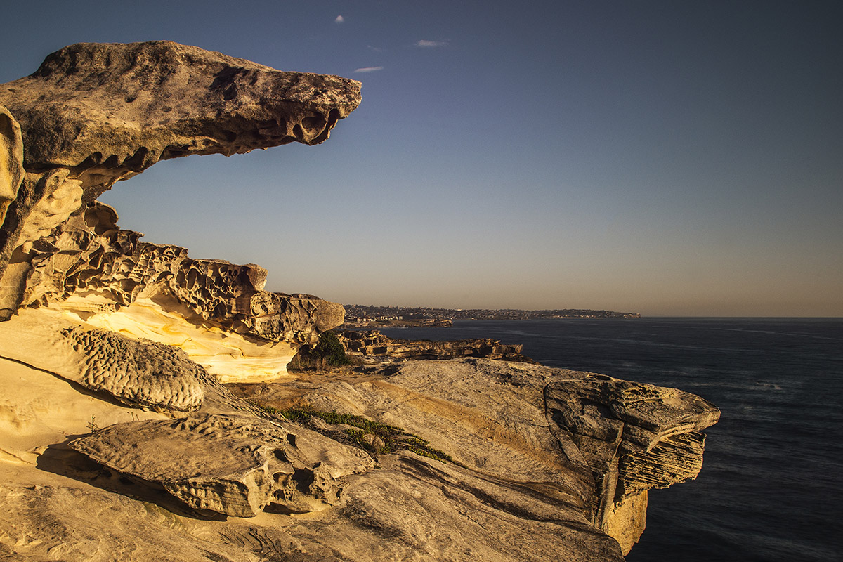 Sydney Rock VI