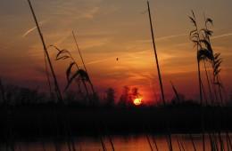 Betuwe Sunsets