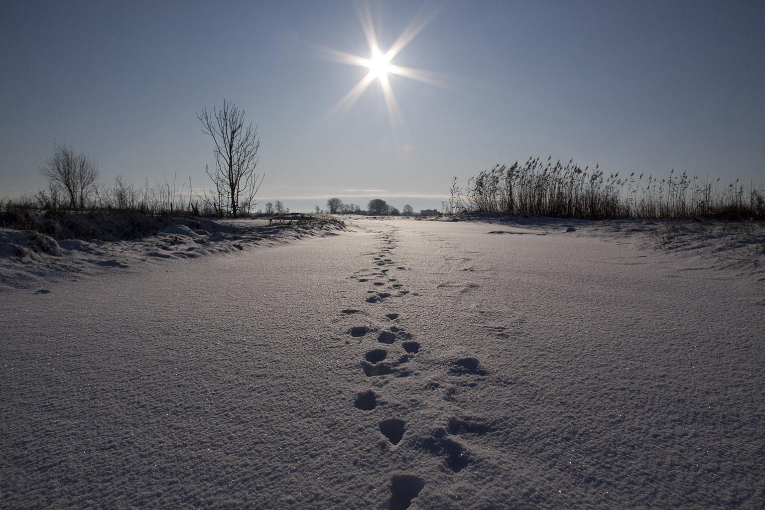 Utrecht Winter 2009 11