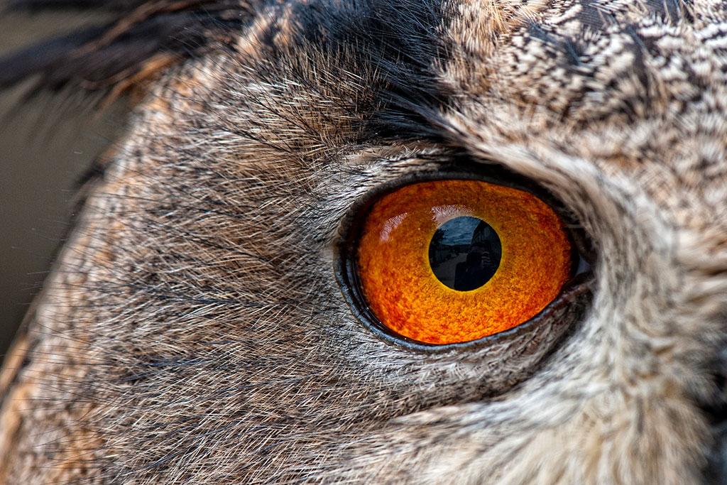 018-001-001-Animal-Eyes-01