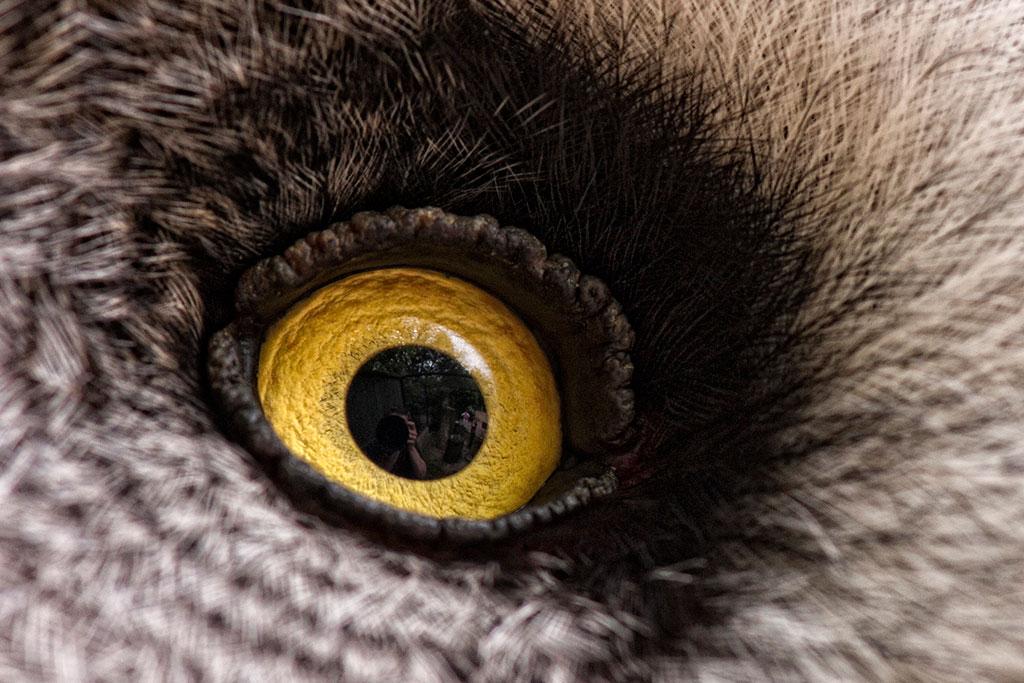 020-003-003-Animal-Eyes-03