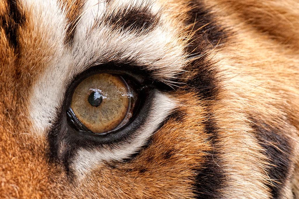 021-005-004-Animal-Eyes-05