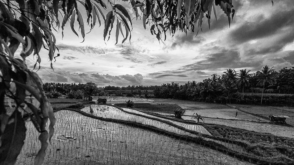 Indonesia-black-1-Bali-076