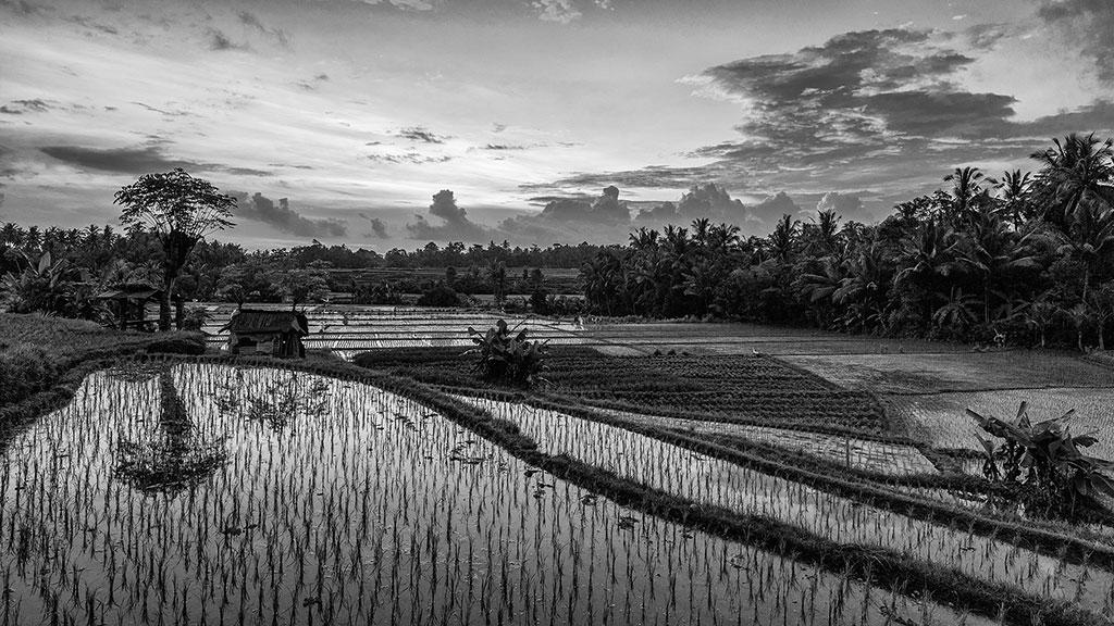 Indonesia-black-1-Bali-077