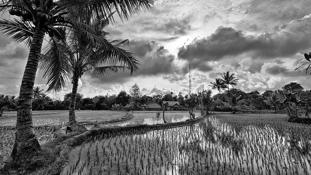 Indonesia-black-3-Lombok-005